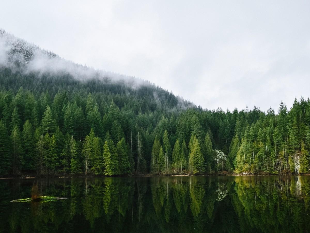 Mist floating over placid lake in a northwest forest